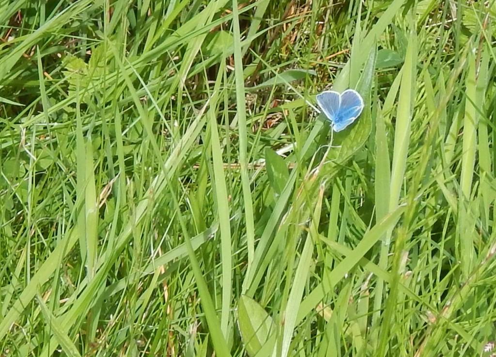 Butteryfly